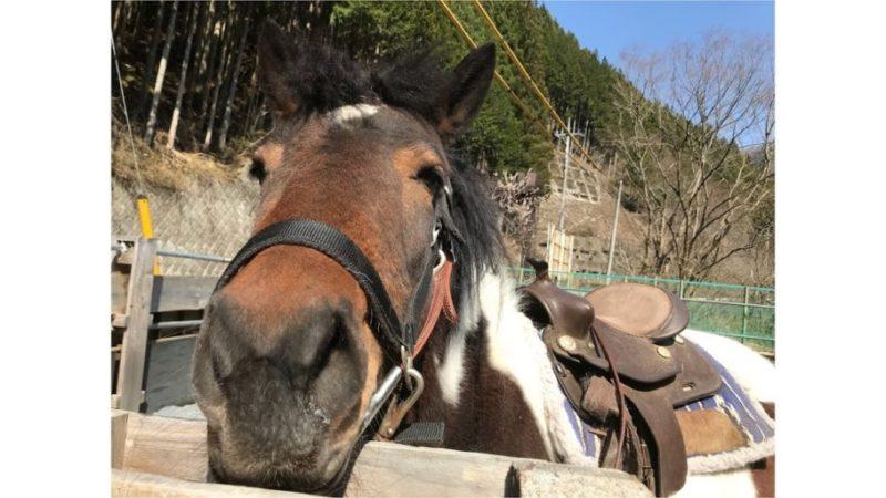 乗馬体験/馬とグループワーク