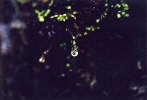 最初の一滴-水干