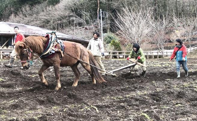 小菅村 馬耕体験(報告&舞台裏)【後編】