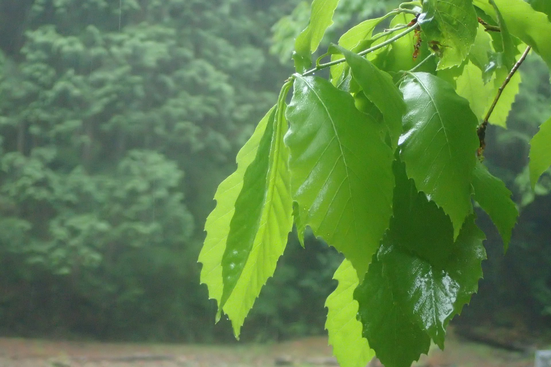 雨男だからこそ言わせてほしい、雨の日の源流と森