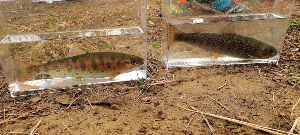 2月17日「近場で山のお魚観察」報告
