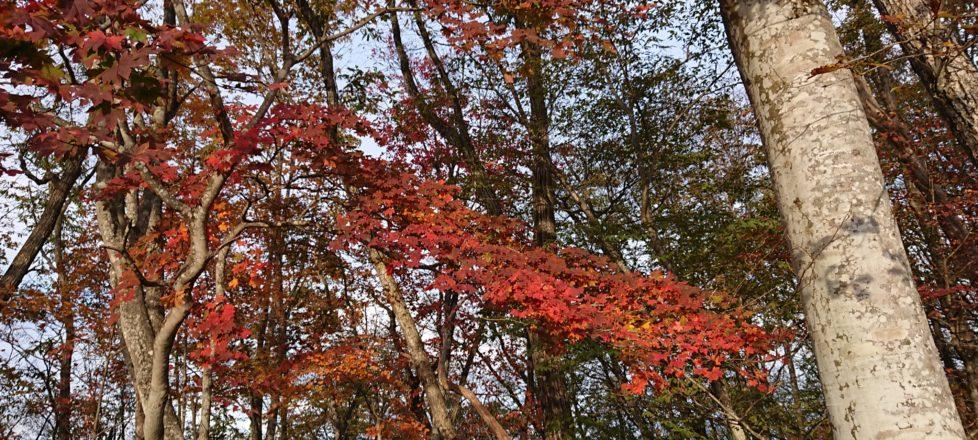 松姫峠の紅葉は?