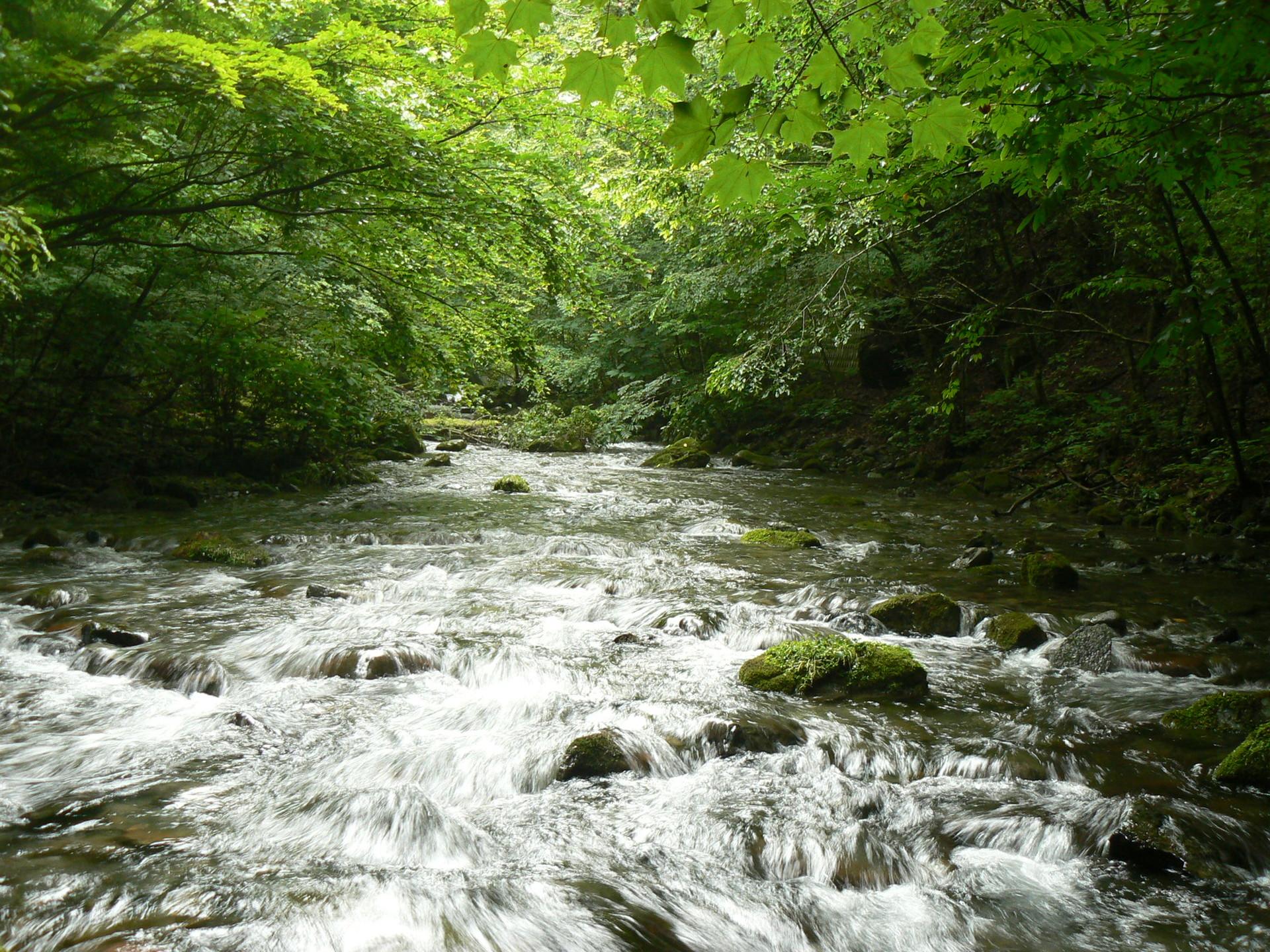 多摩川源流の風景02