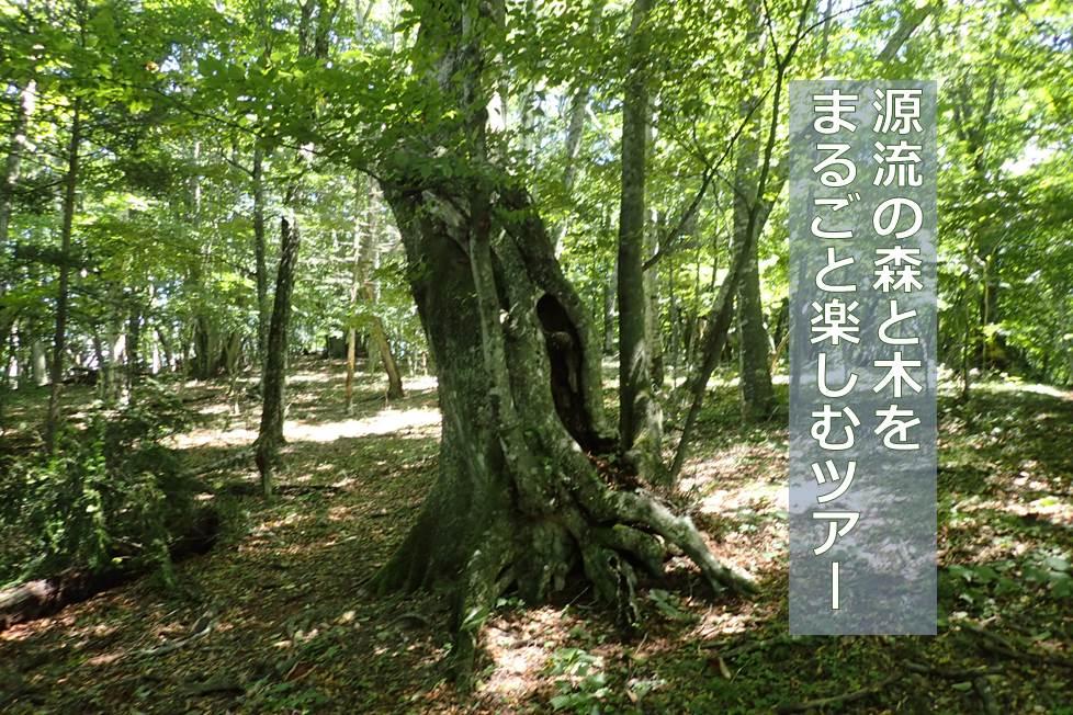 【10/8,9 募集終了】源流の森と木をまるごと楽しむツアー