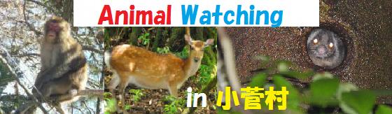 12月17日(土)参加者締切【アニマルウォッチング】