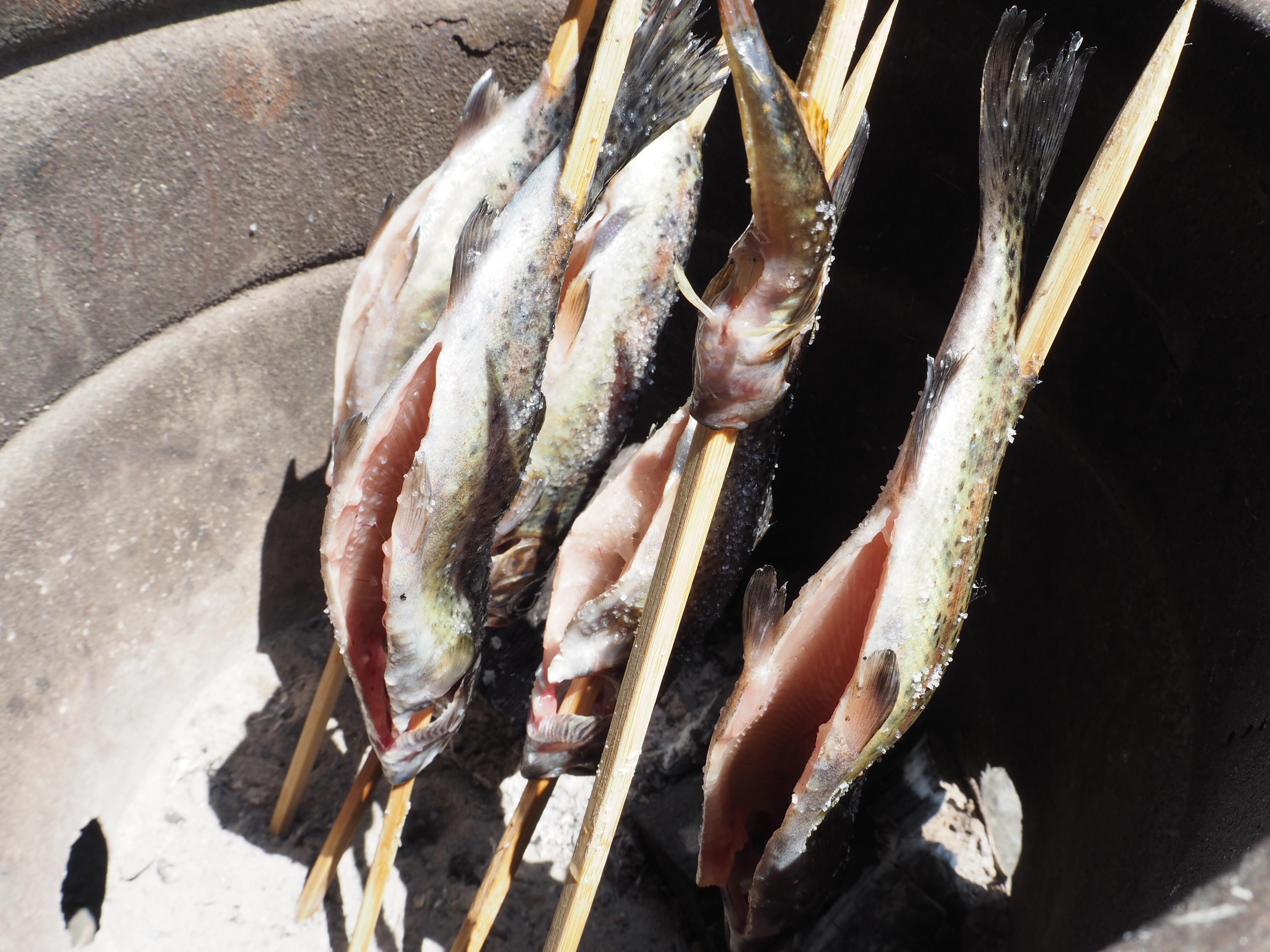 「お試し企画」初心者魚釣り体験 【報告】