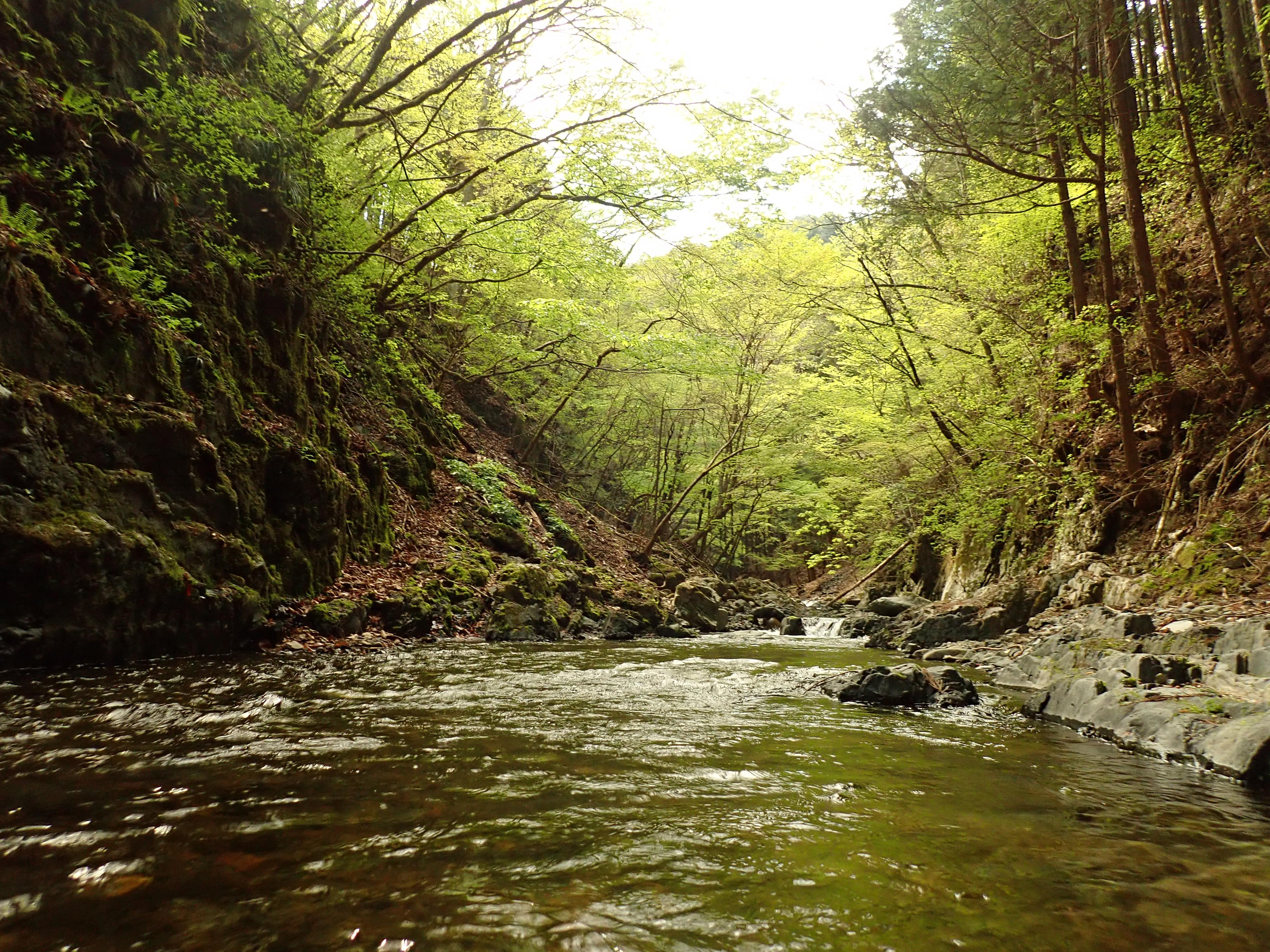 4月28日渓流釣り散策ツアー報告